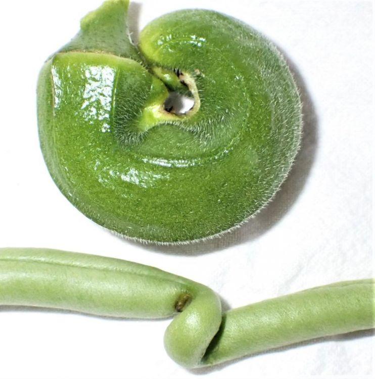 Gardenfind1.JPG